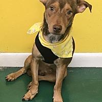 Adopt A Pet :: KING - Fort Pierce, FL