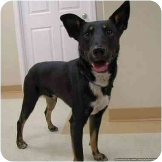 Terrier (Unknown Type, Medium) Mix Dog for adoption in Morden, Manitoba - Junior