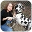 Photo 2 - Great Dane Dog for adoption in Ridgeville, South Carolina - Rudy - ADOPTED!