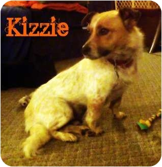Corgi/Australian Cattle Dog Mix Dog for adoption in Watertown, South Dakota - Kizzie