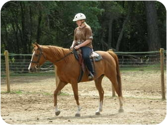 Thoroughbred for adoption in El Dorado Hills, California - Rye