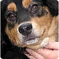 Adopt A Pet :: Cody - Jacksonville, FL