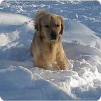 Adopt A Pet :: Hunter - Alexandria, VA
