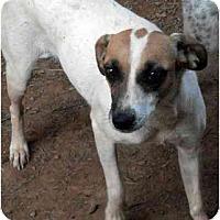 Adopt A Pet :: Diamond - Harrison, AR