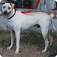 Adopt A Pet :: Casper - Gilbert, AZ