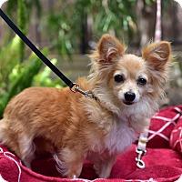 Adopt A Pet :: Dahlia - Santa Monica, CA