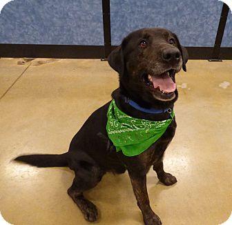 Labrador Retriever Mix Dog for adoption in Bowie, Maryland - Adopted! Maximus