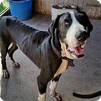 Adopt A Pet :: Brutus - Jupiter, FL