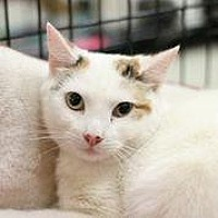 Adopt A Pet :: Bonniebelle - Westerly, RI