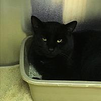 Adopt A Pet :: Dumbo - Richboro, PA