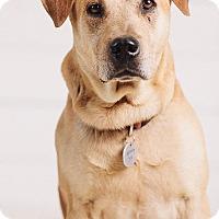 Adopt A Pet :: Malone - Portland, OR