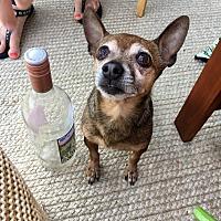Adopt A Pet :: Hercules - Chicago, IL