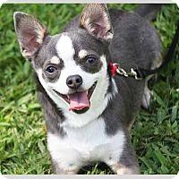 Adopt A Pet :: Dex - South Bend, IN