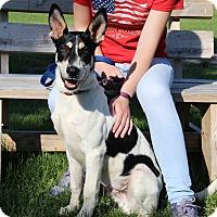 Adopt A Pet :: Mooney-Prison Graduate - Elyria, OH