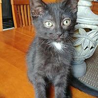 Adopt A Pet :: Louis - South Saint Paul, MN