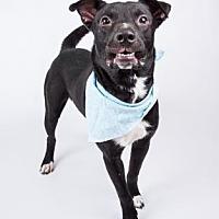 Adopt A Pet :: Gumby - Decatur, GA