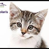 Adopt A Pet :: Polaris - Richardson, TX