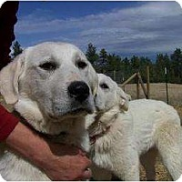 Adopt A Pet :: Madeleine - Hamilton, MT