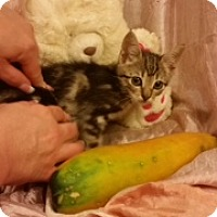 Adopt A Pet :: Farina - Cranford/Rartian, NJ
