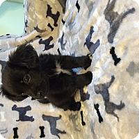 Adopt A Pet :: Cinder - Greencastle, NC