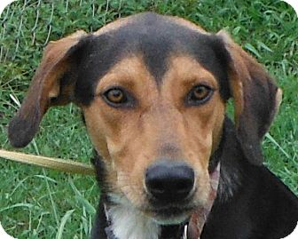 Shepherd (Unknown Type)/Hound (Unknown Type) Mix Dog for adoption in Cedartown, Georgia - 29358481