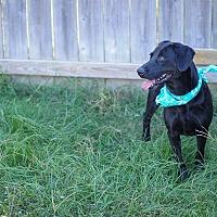 Labrador Retriever/Golden Retriever Mix Dog for adoption in Jackson, Mississippi - Eva