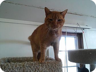 Domestic Shorthair Cat for adoption in Owenboro, Kentucky - CHARMED!