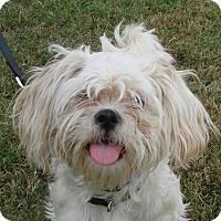 Adopt A Pet :: Mollly - Erwin, TN