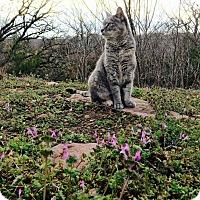 Adopt A Pet :: Yoki - Edmond, OK