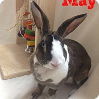 Adopt A Pet :: May - Paramount, CA