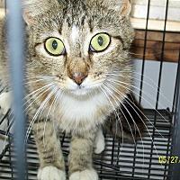 Adopt A Pet :: Ada - Mexia, TX
