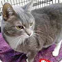 Adopt A Pet :: Prissy - Cloquet, MN