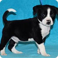 Adopt A Pet :: **JAQUAR** meet July 8th! - Mukwonago, WI