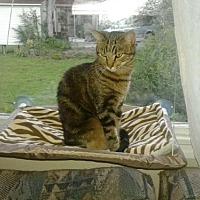 Adopt A Pet :: Blaze - Greensboro, NC