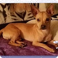 Adopt A Pet :: Mason(OS) - Whitestone, NY