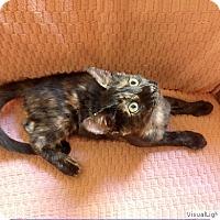 Adopt A Pet :: Jasmine - Westchester, CA