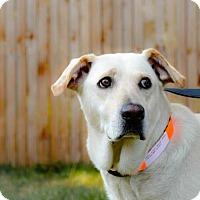Adopt A Pet :: Shanice - Denver, CO