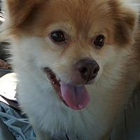 Adopt A Pet :: Yoshi - Columbus, OH