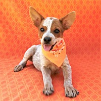 Adopt A Pet :: Beatrice - Burbank, CA