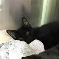 Adopt A Pet :: Vikitas - Barco, NC