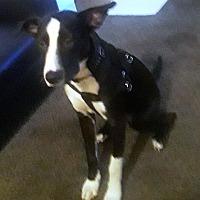 Adopt A Pet :: Jeffery - Las Vegas, NV
