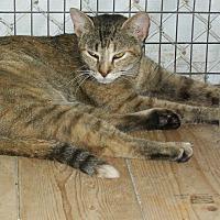 Adopt A Pet :: Lacey - Mexia, TX