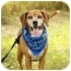 Photo 2 - Labrador Retriever/Hound (Unknown Type) Mix Dog for adoption in Portsmouth, Rhode Island - Manny