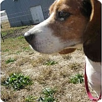 Adopt A Pet :: Ashley - Indianapolis, IN