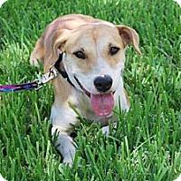 Adopt A Pet :: Sadie - Minneola, FL