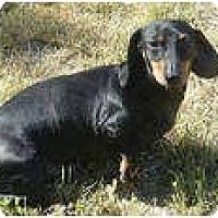 Adopt A Pet :: Lola - San Jose, CA