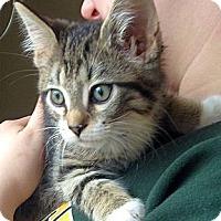 Adopt A Pet :: Olaf - Green Bay, WI