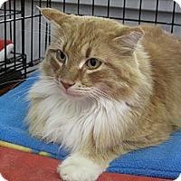 Adopt A Pet :: Leo - Port Republic, MD
