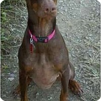 Adopt A Pet :: Diamond--adopted!! - New Richmond, OH