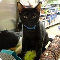 Adopt A Pet :: DAVIS - Diamond Bar, CA